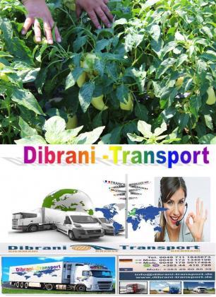 Transport nga Kosova  prodhimet  bio speca ,domate,trangulj ,laker etj nga Dibrani -Transport